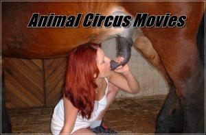 Animal Circus Movies